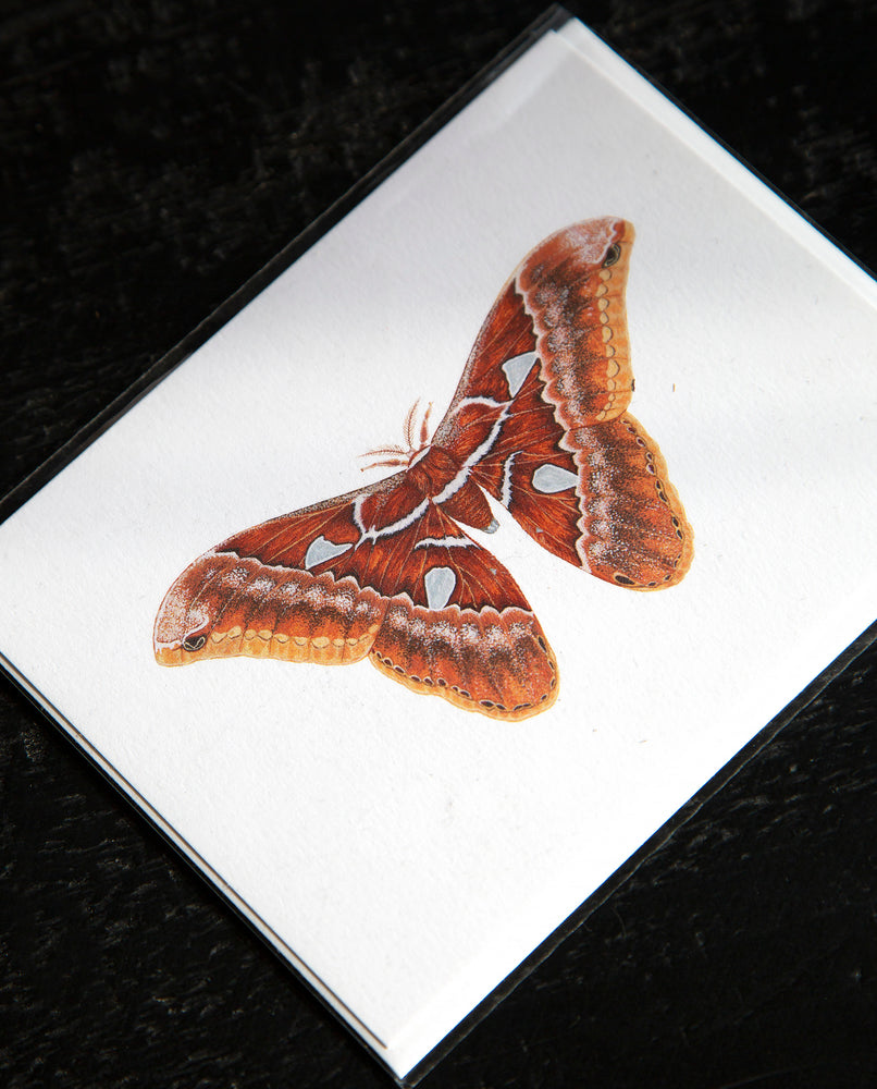 Orizaba Silkmoth Greeting Card - Open Sea Designs