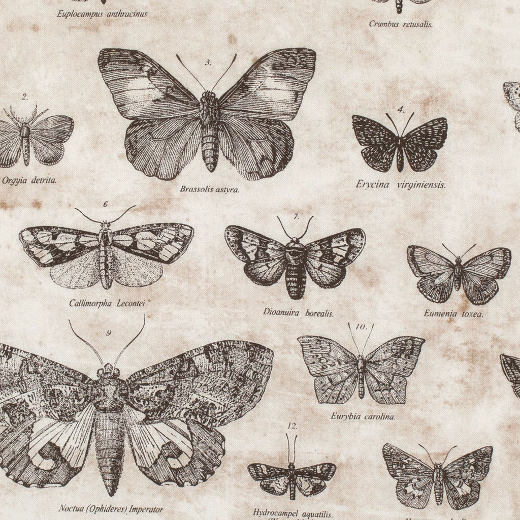 Tim Holtz Butterfly butterflight fabric yardage - Fabric - Craft Supply House