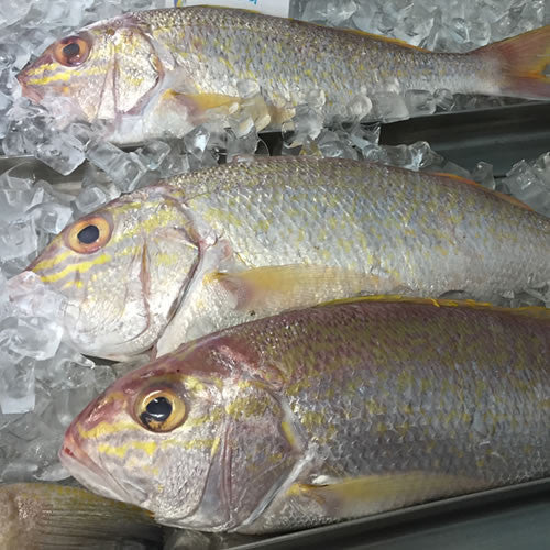 Goldband Snapper whole