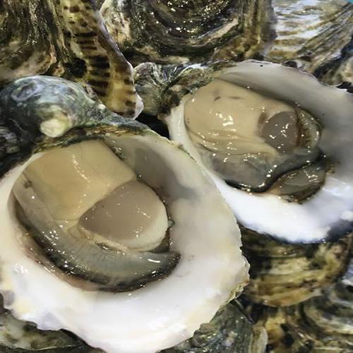 Bivalves Oysters Pacific plate 1/2dz