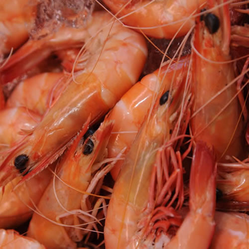 Large Ocean King Prawns 500g