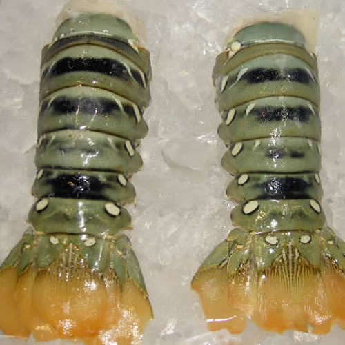 Lobster Tails Green