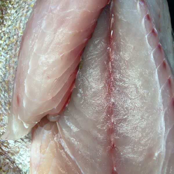 Goldband Snapper Fillets fresh Aussie