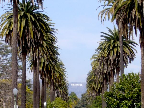 LA's Palm Trees Are Dying: Here's What That Means