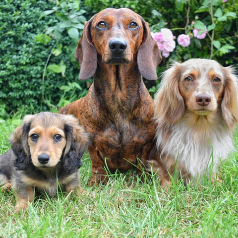 Beau, Barney and Buddy