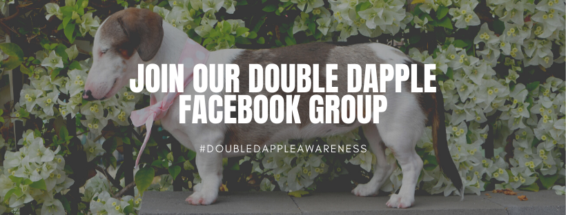 Double Dapple Awareness Facebook Group
