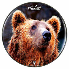 Grizzly bear graphic Remo drum head by Visionary Drum