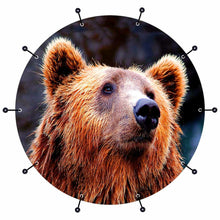 Grizzly bear graphic bass face drum art banner