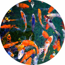 Koi design graphic drum skin by Visionary Drum; fish drum art