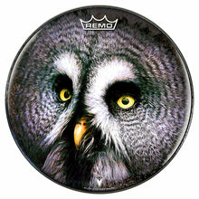 Owl Design Remo-Made Graphic Drum Head by Visionary Drum; night owl drum art