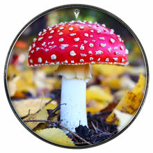 Amanita Mushroom graphic drum skin installed on bass drum head by Visionary Drum