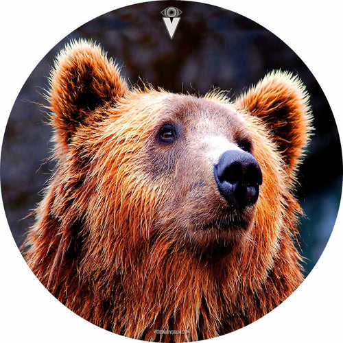 Grizzly bear graphic drum skin art by Visionary Drum