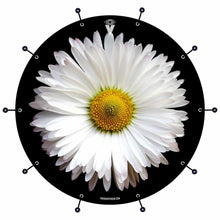 Daisy bass face drum banner by Visionary Drum; nature symmetry drum art