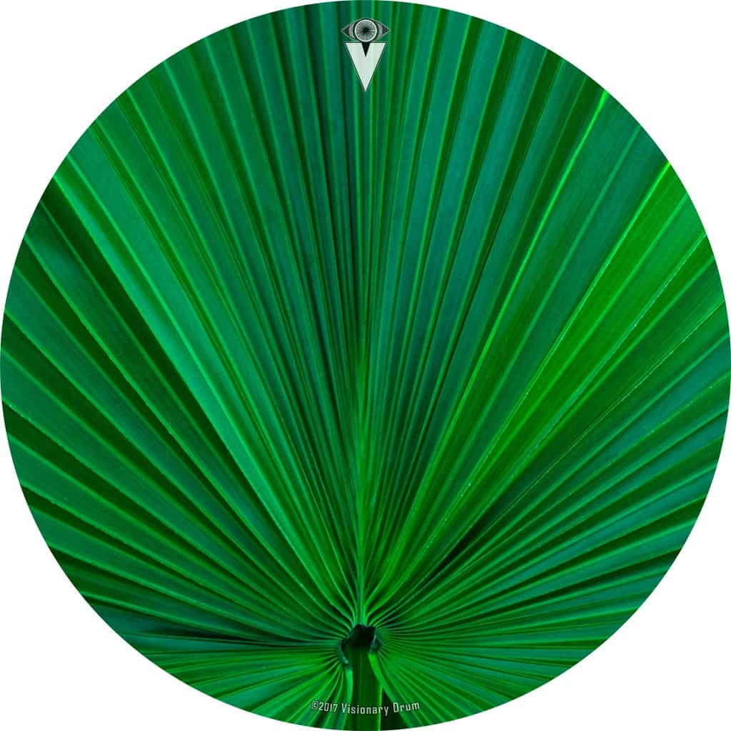 Fan Leaf design graphic drum skin by Infinity Arts; nature drum art