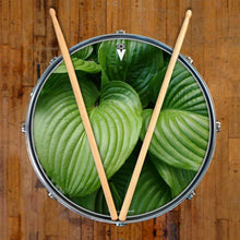 Garden Leaves design graphic drum skin on snare drum by Visionary Drum; leaf drum art