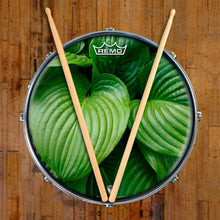 Garden Leaves Design Remo-Made Graphic Drum Head on Snare Drum; abstract nature drum art