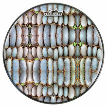 Rock Reflections Design Remo-Made Graphic Drum Head by Visionary Drum; nature pattern drum art