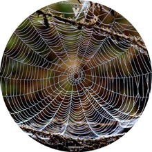 spider web graphic drum skin by Visionary Drum