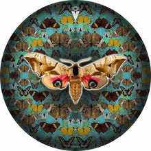 The Moth design graphic drum skin by Visionary Drum; nature drum art