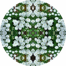 White Flowers design graphic drum skin by Visionary Drum; clover flowers drum art