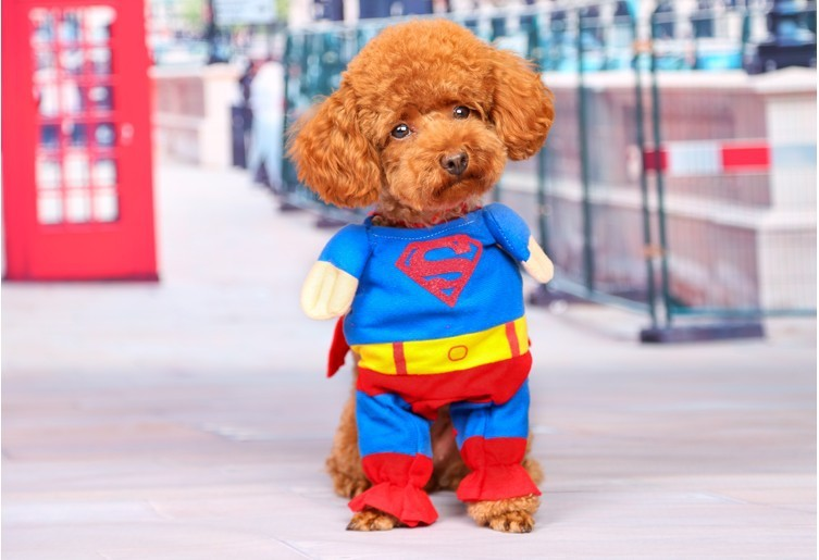 Superman Pet Costume, Dog and Cat Clothes, Dog Halloween Costume