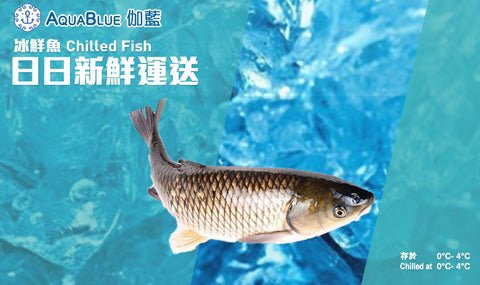 新鮮鯇魚(已切) | Fresh Grass Carp (FISH)