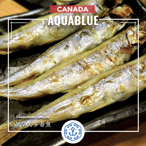 加拿大多春魚 約200g [需烹調] | Canadian Capelin ~200g [Need to be cooked]