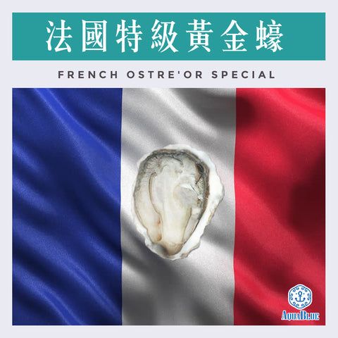法國特級黃金蠔 (No.2) FRENCH OSTRE'OR SPECIAL OYSTER