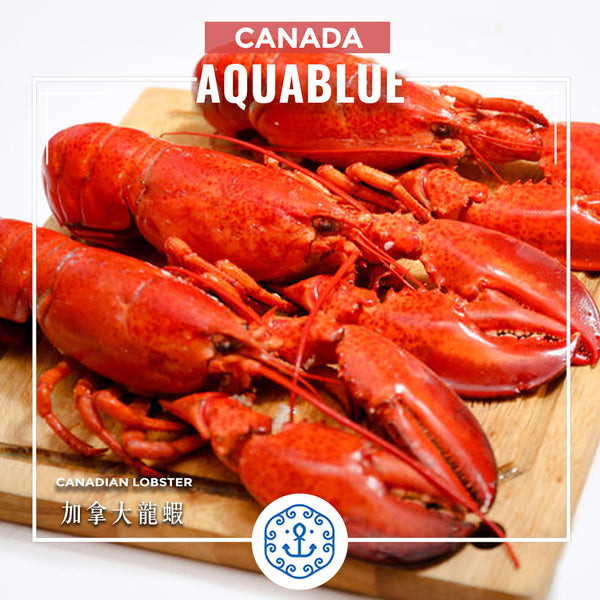 加拿大龍蝦(熟) 400g-450g [解凍即食] | Canadian Lobster 400g-450g [Edible after thawing]