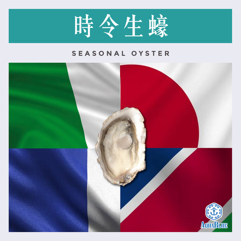 時令生蠔 (No.2) | Seasonal Oyster (No.2)