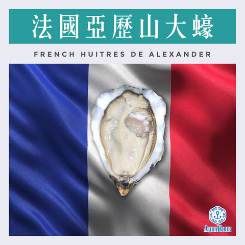 法國亞歷山大蠔 (No.0) (12隻裝) (需預訂) |French Huitres de Alexander (12pc) Need to pre-order