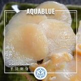 平貝刺身 ~200g [解凍即食] | Frozen Scallop Sashimi Slice ~200g [Edible after thawing]