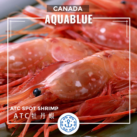 加拿大牡丹蝦(J) (16-20隻)(需預訂) [解凍即食] | Canadian ATC Spot Shrimp (J)(16-20pc)(Pre-order) [Edible after thawing]