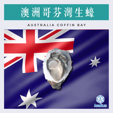 澳洲哥芬灣生蠔 Australia Live Oyster Coffin Bay