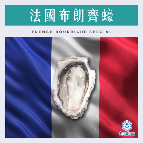 法國布朗齊蠔 (No.2)  FRENCH BOURRICHE SPECIAL OYSTER