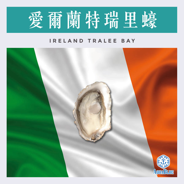 愛爾蘭特瑞里蠔 Ireland Tralee Bay No.2