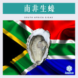 南非生蠔 South Africa Saldanha Bay Oyster 100-110g