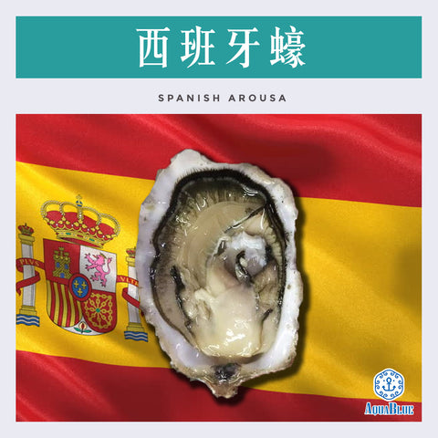 西班牙蠔 SPANISH AROUSA 12隻裝 (175-200gm) (需預訂) | SPANISH AROUSA 12pc (175-200gm) (Need Pre-order)