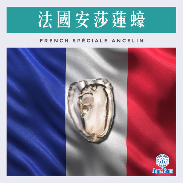 法國安莎蓮蠔 (No.2) FRENCH ANCELIN SPECIALE OYSTER