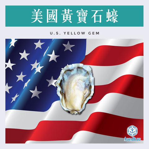 美國黃寶石蠔 12隻裝 (No.2) U.S. Yellow Gem Oyster  | U.S. Yellow Gem Oyster 12pc (No.2)