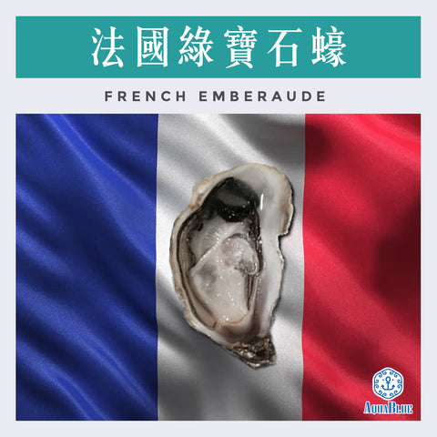 法國綠寶石蠔(No.2) FRENCH EMBERAUDE OYSTER