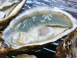 法國綠翡翠蠔 (No.2) French L'emeraude Oyster