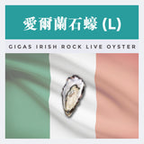 愛爾蘭石蠔(L) GIGAS IRISH ROCK LIVE OYSTER