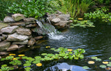 7 Plants That Will Liven Up Your Pond