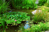 Four Seasons of Pond Care