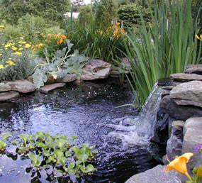 How To Get Your Pond Ready For The Season
