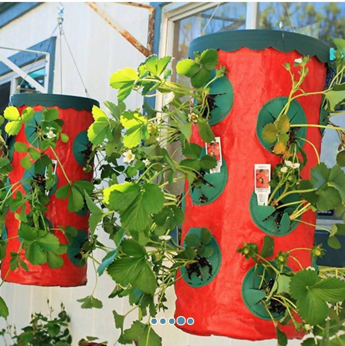 Herbs Vegetables Fruit Topsy Turvy Upside Down Planters Growers