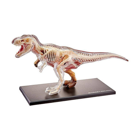 Animal Anatomy T-Rex
