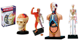Human Anatomy x 4 Models Pack starter kit