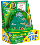 Insect Lore Bug Land Habitat - UK Imports STEM toys dandashop.co.za